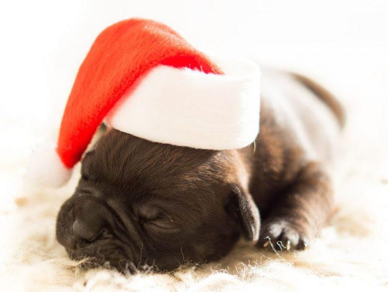 Prae Charity Shopping Hund 768x579 - 10 Jahre Charity Shopping! Helfen Sie helfen - ohne eigene Mehrkosten!