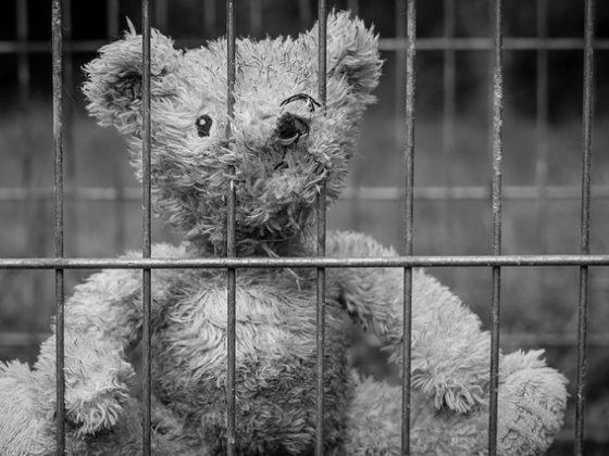 teddy 2711675 640 560x420 - Was passiert, wenn ein Elternteil ins Gefängnis muss? ZDF-Bericht über das Eltern-Kind-Projekt